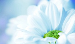 Fabulous-White-Flower-Background